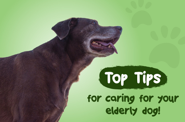 Top Tips for caring for your elderly dog.