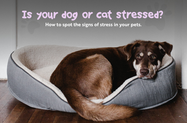 Is your dog or cat stressed or suffering separation anxiety ? How to resolve ?