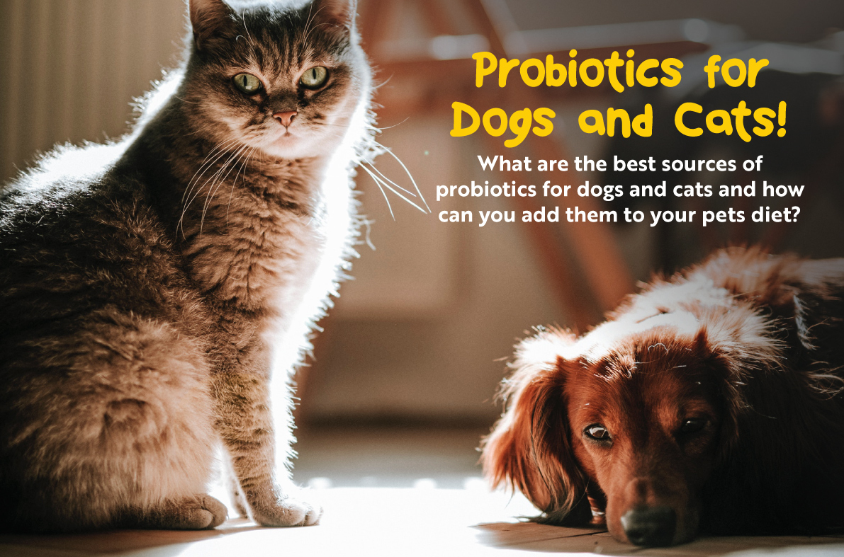 The Massive benefit of probiotics in dogs and cats